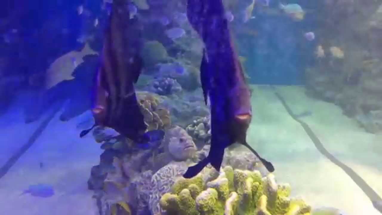 Under the sea the little mermaid a fish tank youtube for Fish tank mermaid