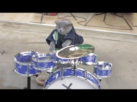 Cat Drum Solo