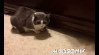 Madsonik -