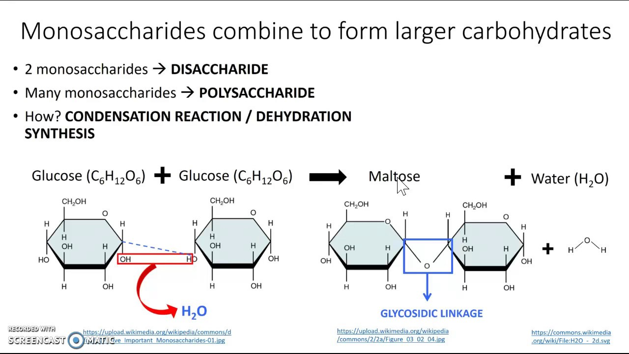 condensation of carbohydrates - 1280×720