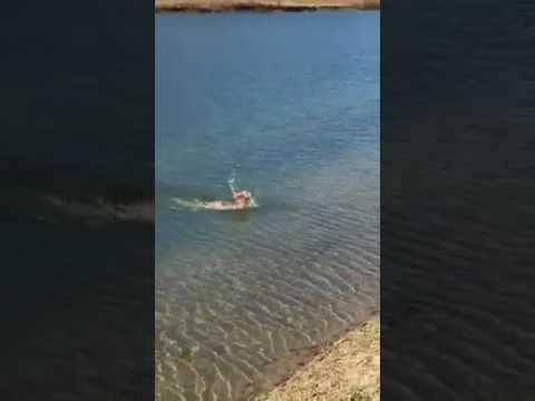 Как плавает заяц видео