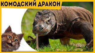 видео Мифологическая энциклопедия: Животные в мифологии: Черепаха