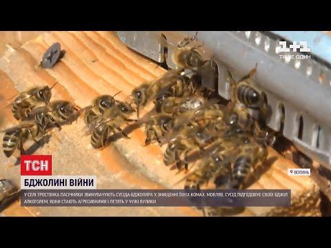 П'яні бджоли на
