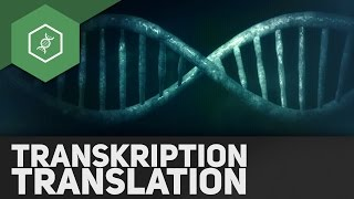 Transkription & Translation – Genetik Abi Special(Weiter geht's im Bio-Abi mit Transkription & Translation! Unser Special zum Genetik-Abi beschäftigt sich mit den Schritten bei der Umsetzung von genetischen ..., 2016-04-17T14:00:01.000Z)