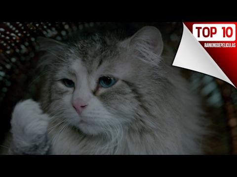 Las 10 Mejores Peliculas De Gatos
