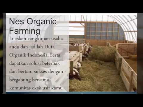 Potensi hasil 80jt hanya dari lahan 7x8 m (Nes Organic Farming)