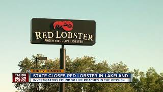 Dirty Dining: Red Lobster shut down by inspectors for over 50 live roaches crawling near food