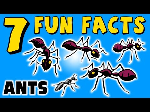 7 FUN FACTS ABOUT ANTS! ANT! FACTS FOR KIDS! Learning Colors! Funny! Sock Puppet!