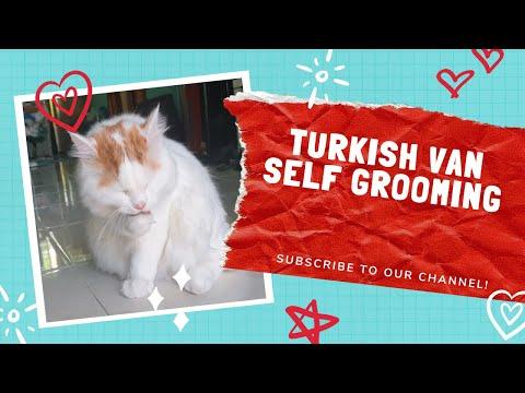 Turkish van cat do self grooming