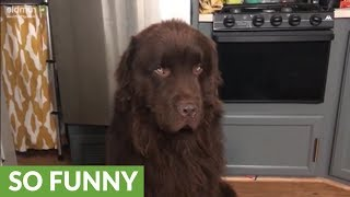 Newfoundland's priceless response when asked about Mondays