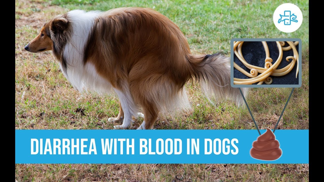Diarrhea With Blood In Dogs Are There