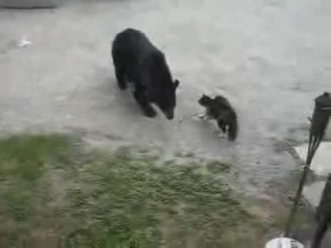 кот и лиса знакомство полная версия