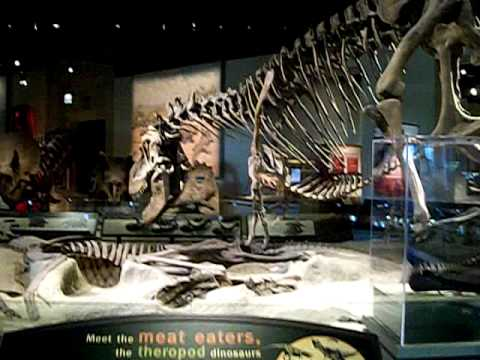Dinosaurs at The Field Museum, Chicago 2/2
