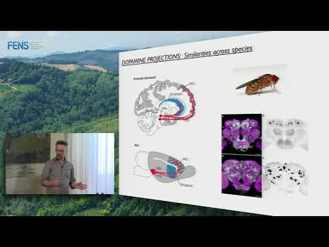 Mark Walton on Rapid dopamine release during decision making - Part 1