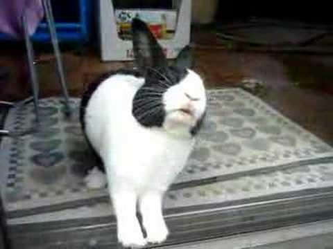 Rabbit Biting Glass Youtube