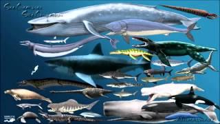 Największy rekin na świecie! Większy od statku!!!!