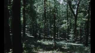 L'Enfant des loups - La Peau de la louve - Épisode 2 sur 3