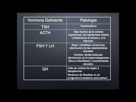 ▶fisiologia capitulo 75 hormonas pituitarias y su control por medio del hipotalamo