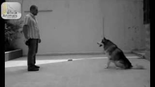 No excuse for dog abuse التدريب الصحيح للكلاب