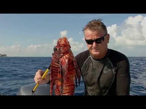 Lionfish Roundup (Season 1, Episode 3)