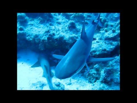 scuba diving turks and caicos islands