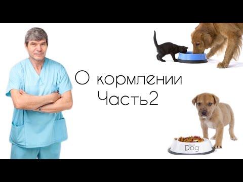 КАК ПРАВИЛЬНО КОРМИТЬ ЖИВОТНОЕ //О кормлении кошек и собак/Часть 2.