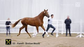 Hanoverian Stallion Licensing 2018- No. 63 Stallion by Flanell - Bretton Woods