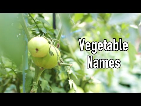 Vegetable Names in Korean