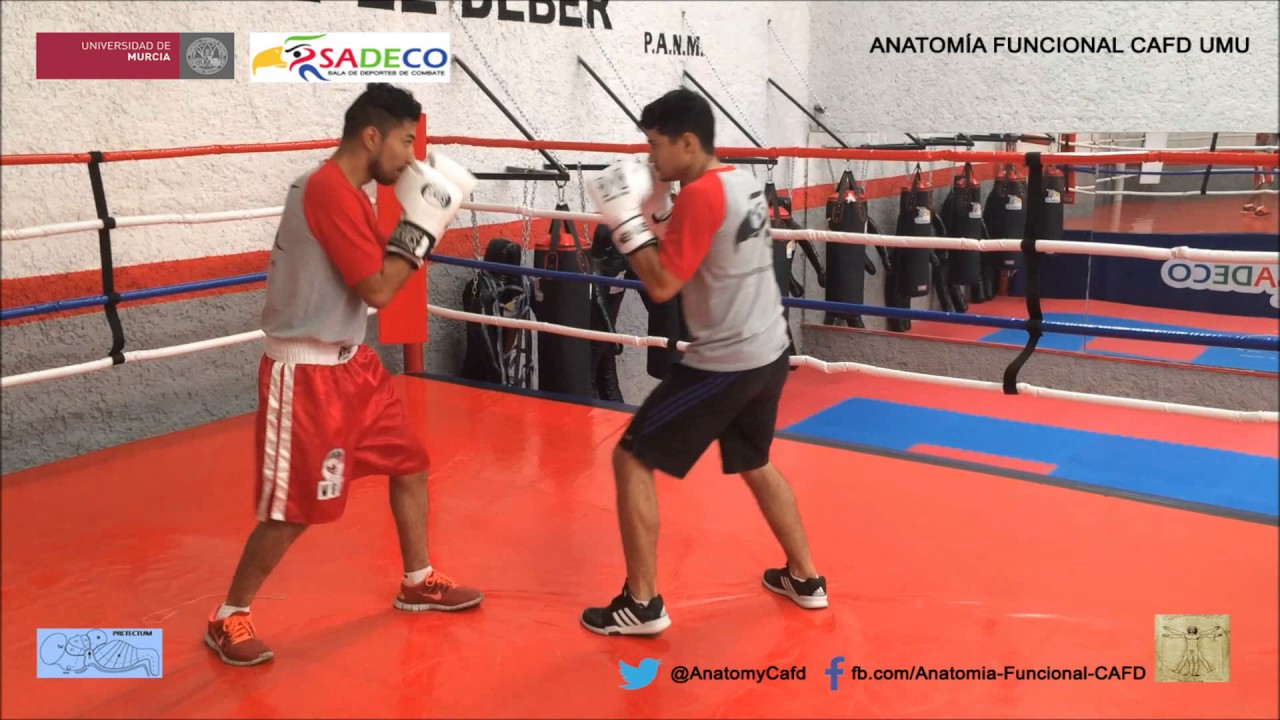Boxeo 1: Castellano (Análisis del Movimiento ) - YouTube