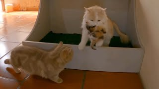 The mother cat carries a herd of kittens hiding under a cupboard.