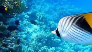 Barriera corallina Danilo Shoni bay 2015  Nikon AW110 UNDERWATER