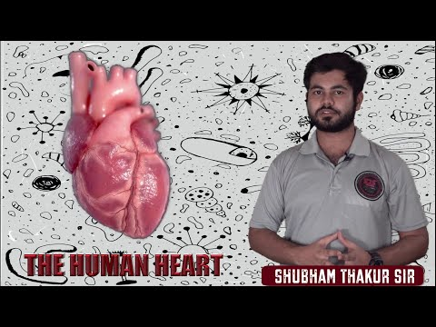 Human Heart | Structure, Functions | Circulatory System | Life Processes | Class 10 - Science Ch 6