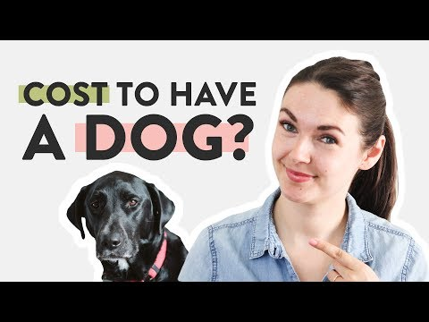 How Much Does It Cost To Have A Dog?