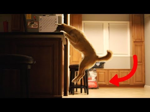 dog caught stealing midnight snack!