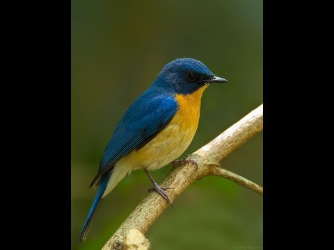 Inilah 47 Nama Nama Burung Langka Di Indonesia