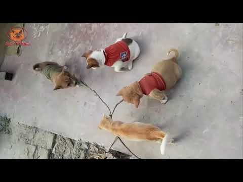 Cute Kitty cats and puppy dogs fighting - Cats And Kittens Video