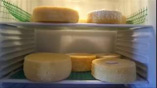 Качотта Fresco / Как сделать сыр в домашних условиях / Ольга Елисеева