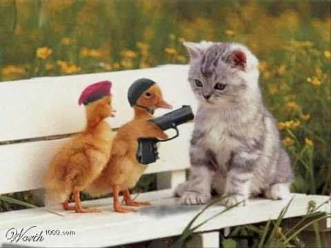 Süße Tierbilder Kostenlos