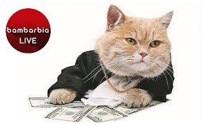 Кот-миллионер: в Италии на кота переписали дом и полтора миллиона евро!