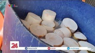 Rùng mình những quả dừa trắng nõn | VTV24