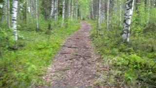 フィンランド自転車旅行:フィンランドの森にて