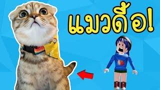 แมวดื้อ! เผยโฉมเป็นคลิปแรก..แมวของพี่นิว