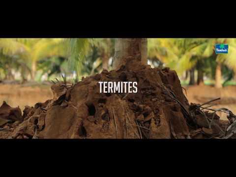 Termites Malayalam Youtube