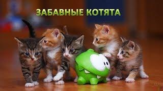 Забавные котята.Играют.