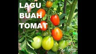 LAGU BUAH TOMAT