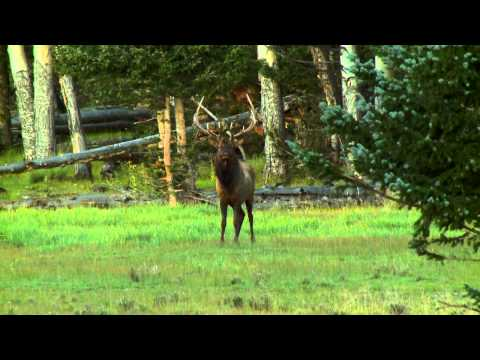 Will Primos Shoots a Big Elk with his Sharps 45-70 Rifle