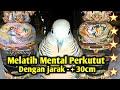 Melatih Mental Perkutut Dengan Jarak  Cm  Mp3 - Mp4 Download