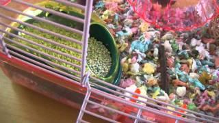 Hamster Info: Potty Training