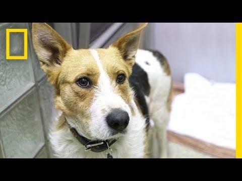 Saved Sochi Dogs Arrive in U.S.
