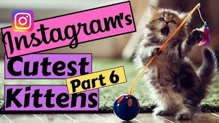 Instagram's cutest Kittens😻 compilation 2019 (part 6) - Try not to Awww- ViralWarMedia